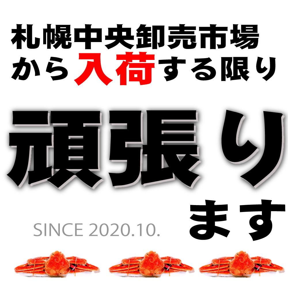 北海道産 ずわいがに 姿 800g前後  ×1尾